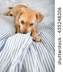 Adorable Small Terrier Mix...