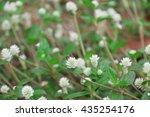 white flower in garden