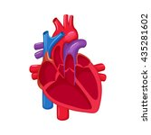 human heart anatomy. medical... | Shutterstock .eps vector #435281602