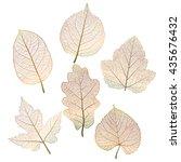 Set  Colored Autumn Leaves On...