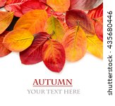 colorful autumn leaves on a... | Shutterstock . vector #435680446