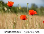 close up of some poppy flowers... | Shutterstock . vector #435718726