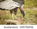 horizontal photo of condor... | Shutterstock . vector #435756946