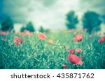 poppy flower in a field with... | Shutterstock . vector #435871762
