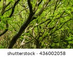 tree branches in the shade of... | Shutterstock . vector #436002058