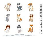 breeds of dog set. funny... | Shutterstock .eps vector #436040782
