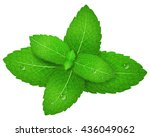 mint. vector illustration. | Shutterstock .eps vector #436049062