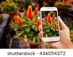beautiful asian landscape.... | Shutterstock . vector #436054372