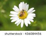 Close Detailed Shot Of A Wasp...