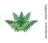 fern plant front view... | Shutterstock .eps vector #436149892
