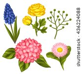 set of garden flowers.... | Shutterstock .eps vector #436224088