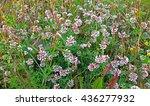 Summer Meadow Flowers. White ...
