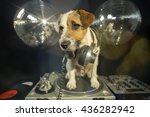 Small photo of a cute jack russell dog with turntable djing, a disco setting. Dj Woof