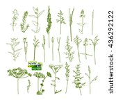 set grass. vector | Shutterstock .eps vector #436292122