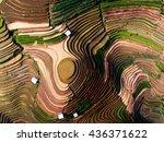 terraced rice field in water...   Shutterstock . vector #436371622