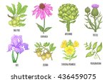 set of medical herbs. shea tree ... | Shutterstock .eps vector #436459075