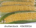 Closeup of several corns on the cob. - stock photo