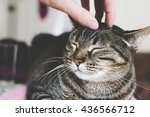 Stock photo man stroking cat s head close up 436566712