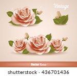 rose flower. vector roses....