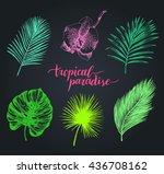 vector vintage palm leaves... | Shutterstock .eps vector #436708162