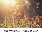 beautiful poppy field with sun... | Shutterstock . vector #436715932