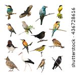 set of photographs of birds... | Shutterstock . vector #436728616