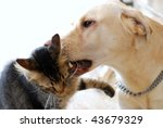 Stock photo beautiful striped cat and dog playing on white background 43679329