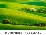 green and yellow wavy hills in... | Shutterstock . vector #436816462