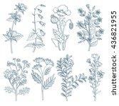 herbs wild flowers botanical...   Shutterstock .eps vector #436821955