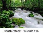 spring oirase valley | Shutterstock . vector #437005546
