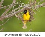 Vertical Photo Of Exotic Bird ...