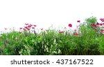fresh flowers and green grass... | Shutterstock . vector #437167522