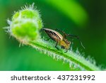 spider lurking silently waiting ... | Shutterstock . vector #437231992