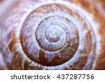 Spiral Shell Close Up Abstract...