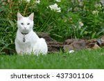 White Cat On Grass