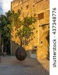 Small photo of Suspended Jaffa Orange tree in Old Jaffa