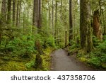 rain forest   a hiking path... | Shutterstock . vector #437358706