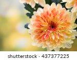Dahlia Flowers Close Up For...