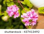 Pink Spring Flowers Flowers In...