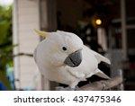 White Parrot  Sulphur Crested...
