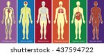 different systems of human body ... | Shutterstock .eps vector #437594722