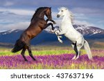 Stock photo two horse rearing up against mountain view in flower field 437637196