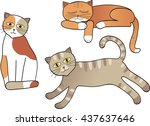 Set Of Cats Isolated