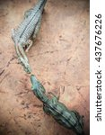 Small photo of top view tyrannosaurus and allosaurus toy on rock