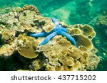 blue starfish on coral. ao sane ... | Shutterstock . vector #437715202