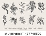 exotic flowers set. botanical... | Shutterstock .eps vector #437745802