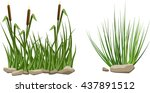reeds in grass and stones... | Shutterstock .eps vector #437891512