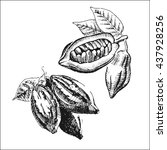 hand drawn cacao beans icon....   Shutterstock .eps vector #437928256
