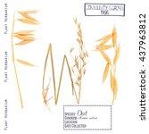 pressed herbarium plant parts...   Shutterstock . vector #437963812