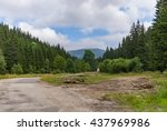Forest Meadow Clearing Log Roa...